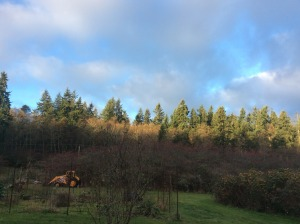 I am thankful for this bit of sunshine here on Thansgiving morning.  See how it works?