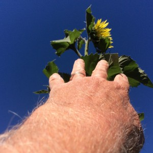 Felipe's selfie try to reach for the top of tallest sunflower.