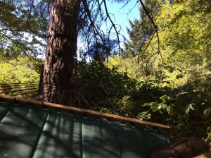 The view from my hammock, siesta time.