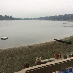 Grey here looking out at Quartermaster Harbor, Vashon Island.