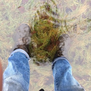 Still pretty wet.