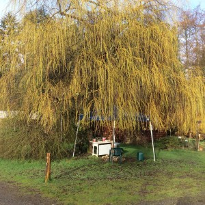 The start and finish of Phil's Camino.  The weeping willow is leafing out.
