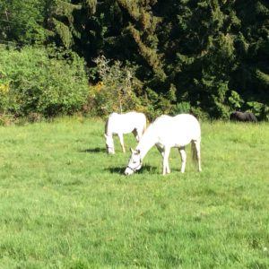 Phil's Camino pasture scene.