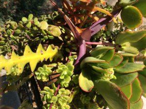LA, land of strange plants.