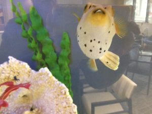 Bucky the fish sitting in lounge chair watched Cancer Tretment Center the reality show.